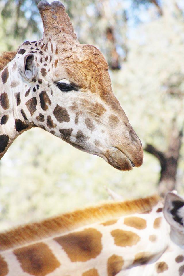 Taronga-Western-Plain-Zoo