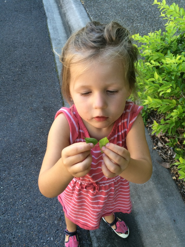 Child's nature hunt findings with Finlee and Me