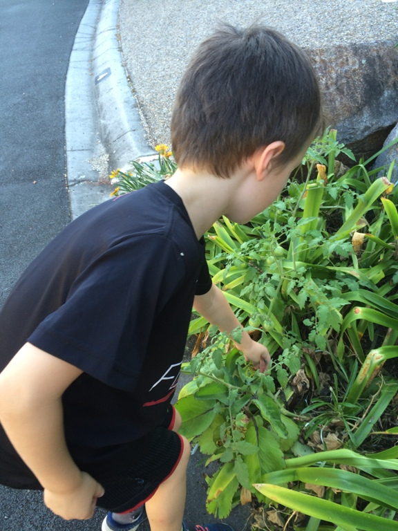 Outdoor nature hunt with Finlee and Me