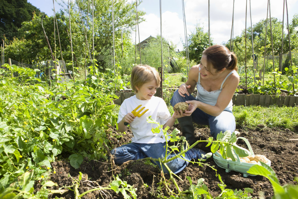 reasons to start a garden with your kids