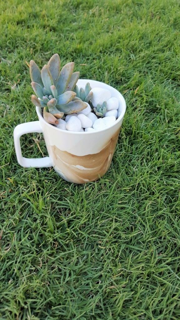 DIY Marbled Mugs with Succulents